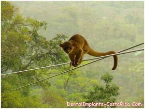 costa-rican-monkey